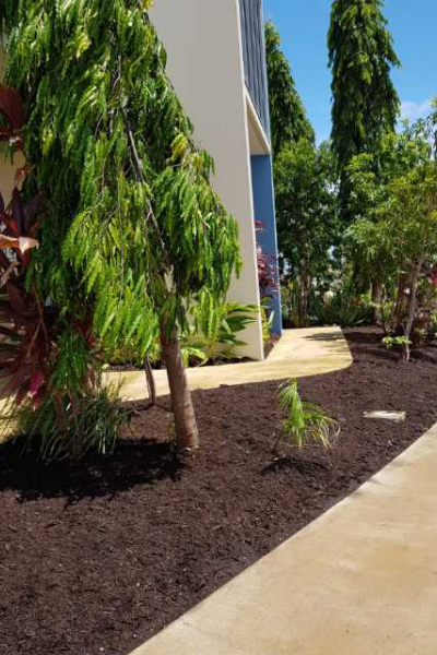 Tidy garden in Townsville